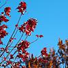 01-Fall Leaves