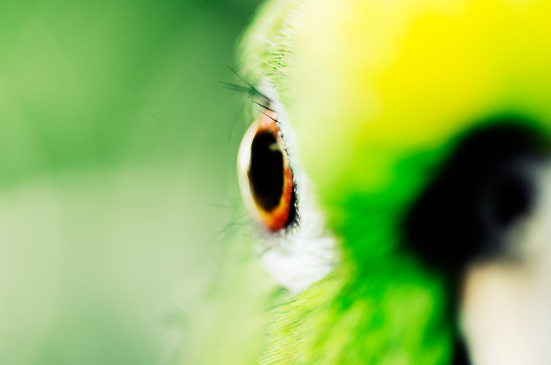 70-Orange Eye