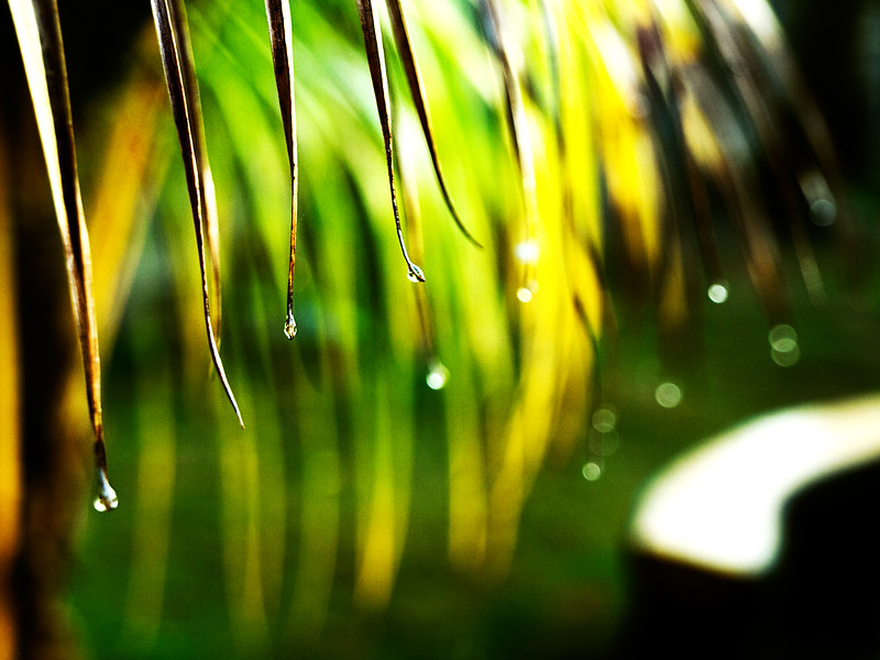 03-Water Droplets