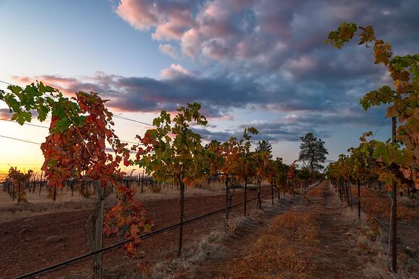 Doe Mill Vineyards, Autumn Sunset, Chico CA
