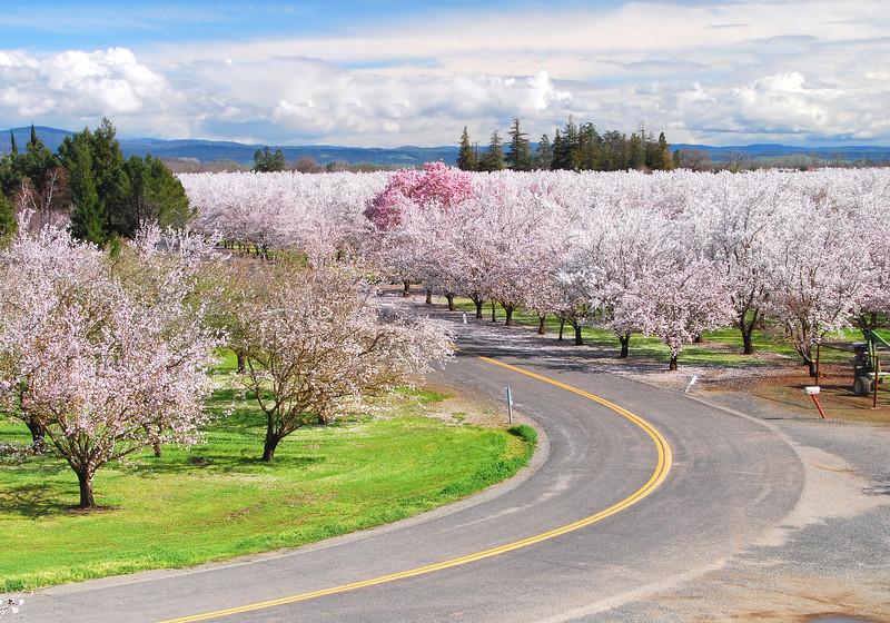 blossom lane, durham
