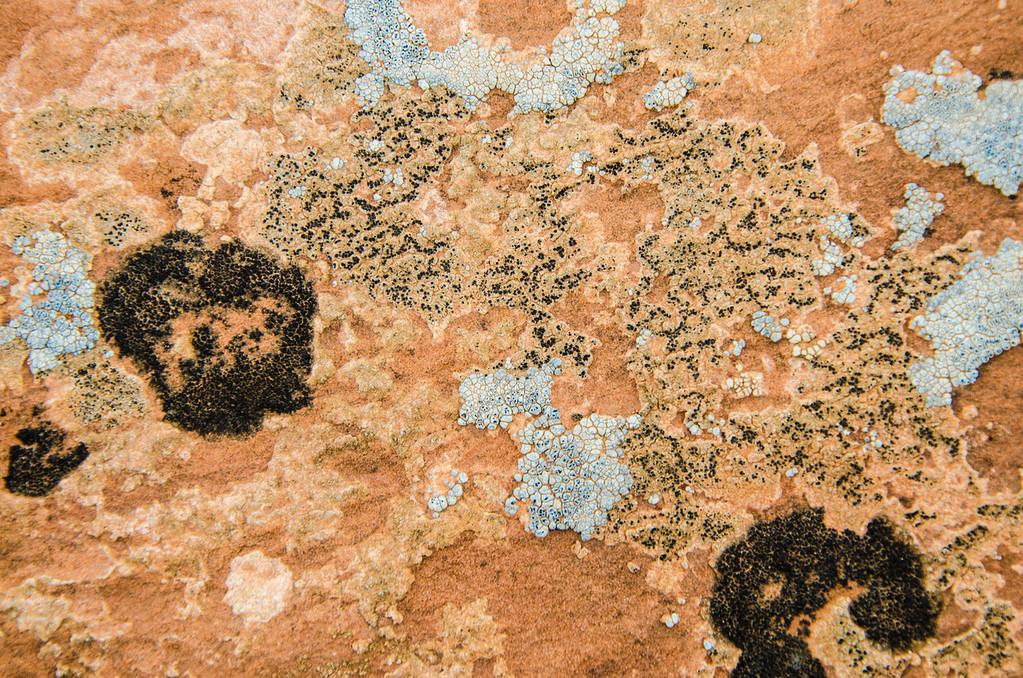"micro-Cosmic (3 of 4): ""Lichen Galaxies & Nebulae"""