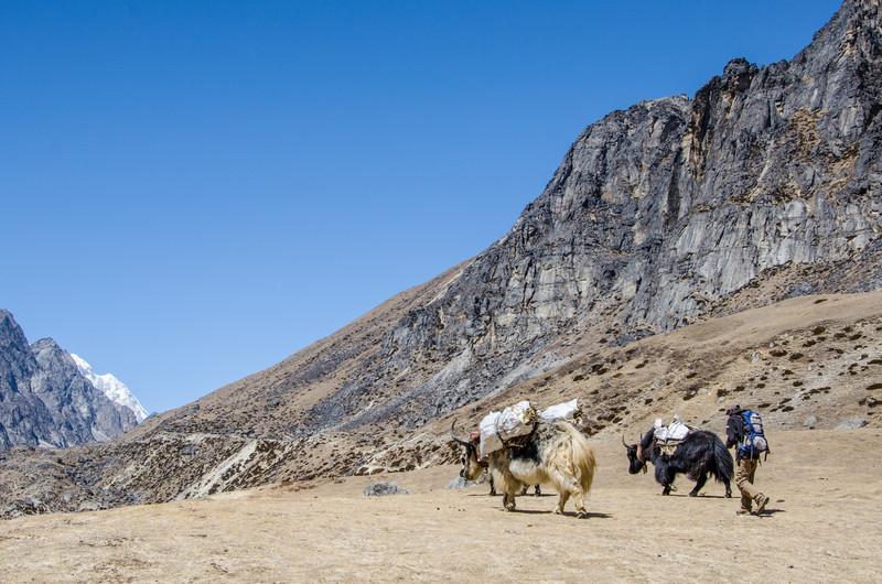 """Edge of Tibet"""