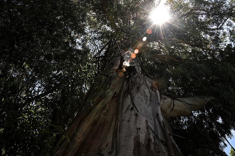 Light Through the Tree