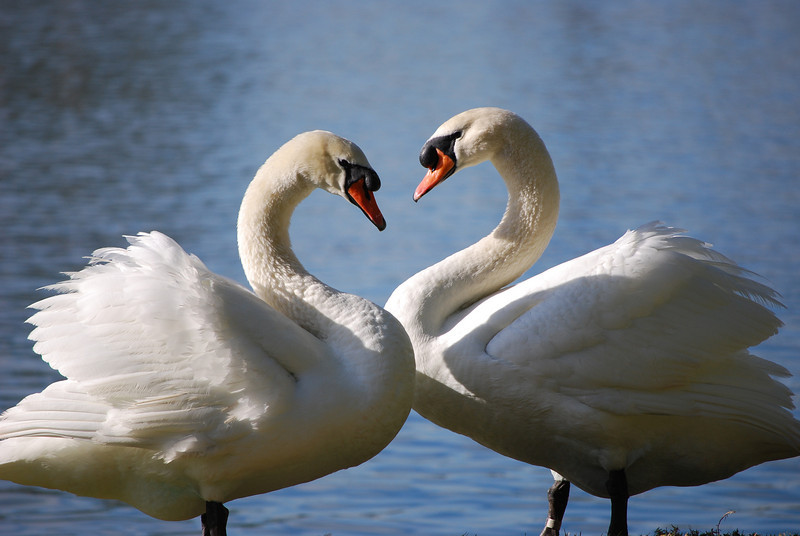 Prelude of Love<br /> by Carolina Schickler