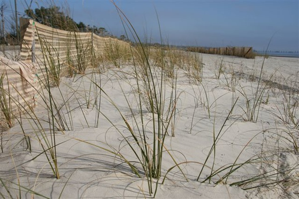 New Beginning #2<br /> By Toni Hayes<br /> The planting of sea oats along the Mississippi Gulf Coast, in hopes of<br /> rebuilding and restoring their beaches.