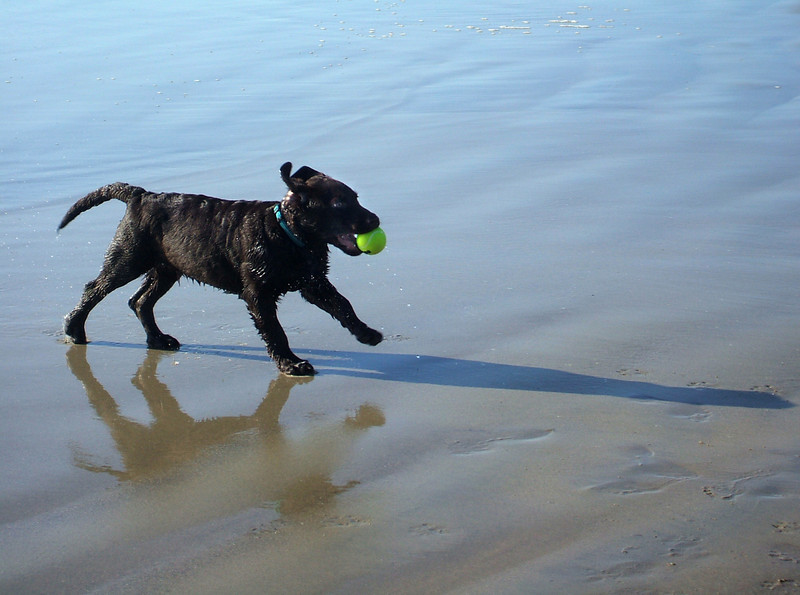 Wyatt's First Day at the Beach<br /> by Claudia Tammen<br /> <br /> Date photo was taken: January 20, 2008
