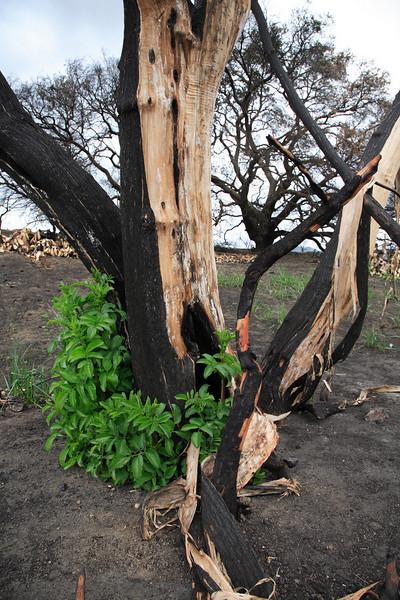 Santiago Canyon, two months after the fires.<br /> by John Sanchez<br /> AKA applejack