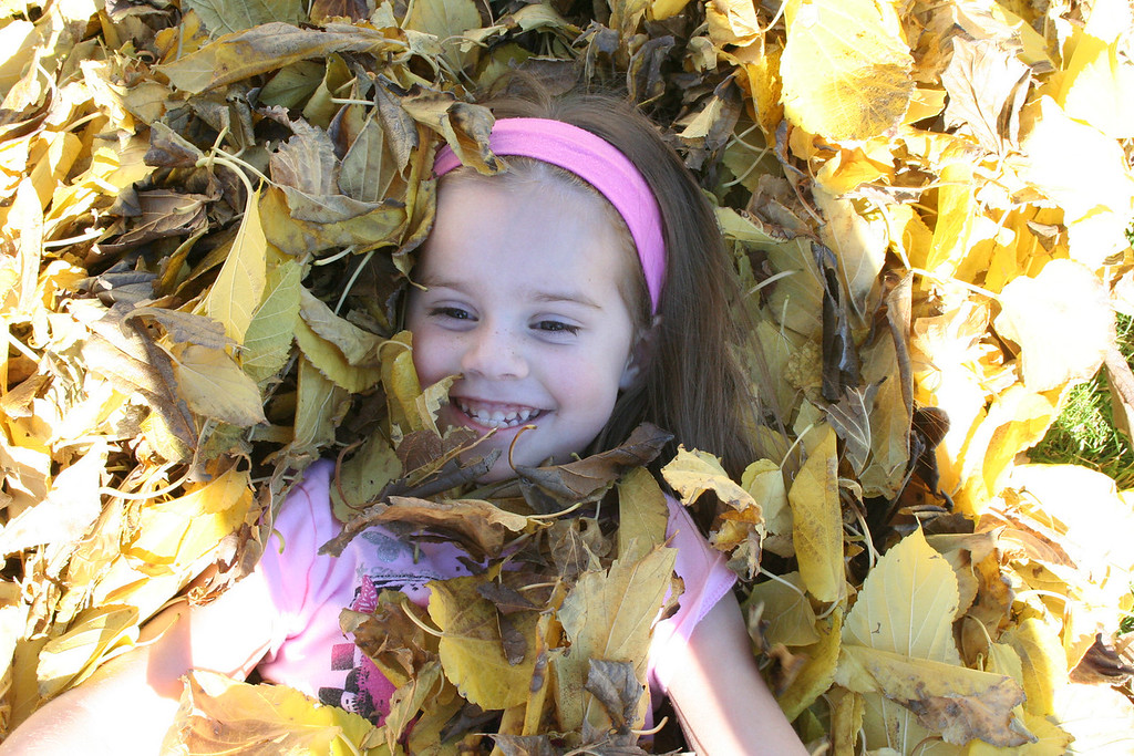 Fun with Leaves<br /> By Carrie Willis