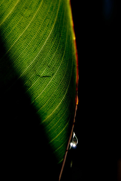 Leaf<br /> <br /> By Erma Tolentino