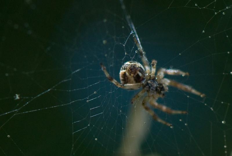 Spider<br /> <br /> By Lisa Detrick