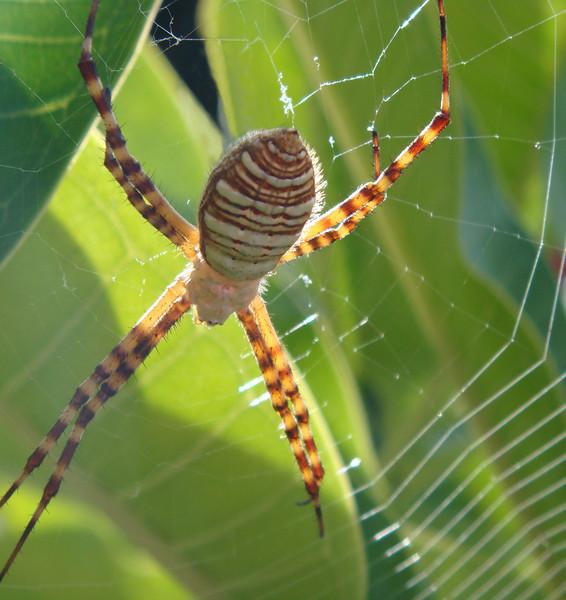 Spider<br /> <br /> By Josie Leon