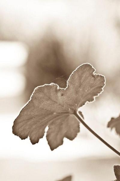 Leaf<br /> <br /> By Anna Jison