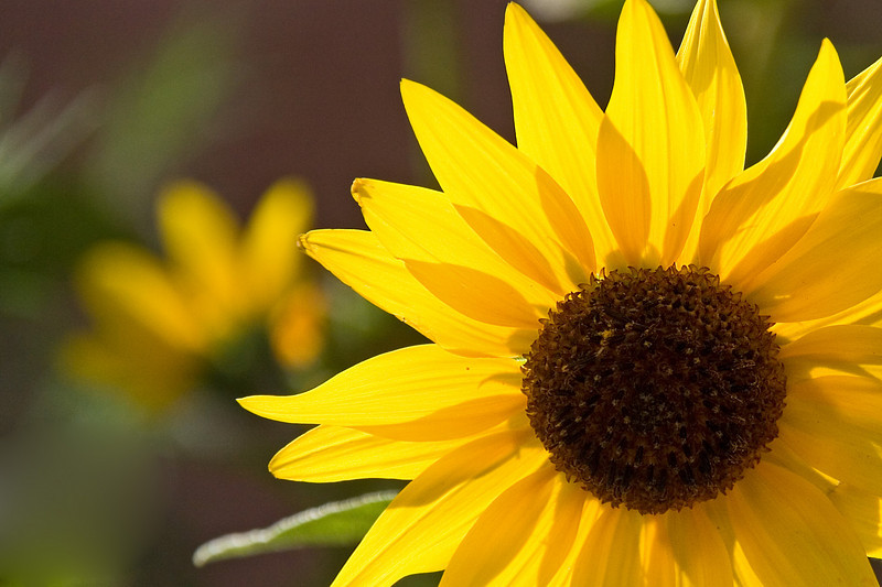 The Sunflower<br /> <br /> By Bill Gerard<br /> Shot in Moab, Utah