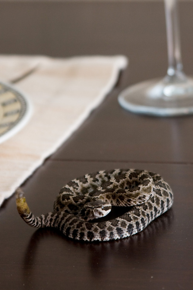 Fear of Finding Snakes in Your Home<br /> By Christy Howell<br />  <br /> Note: I don't mind snakes – but the thought of finding on in my home; invading my comfort zone – makes my skin crawl!