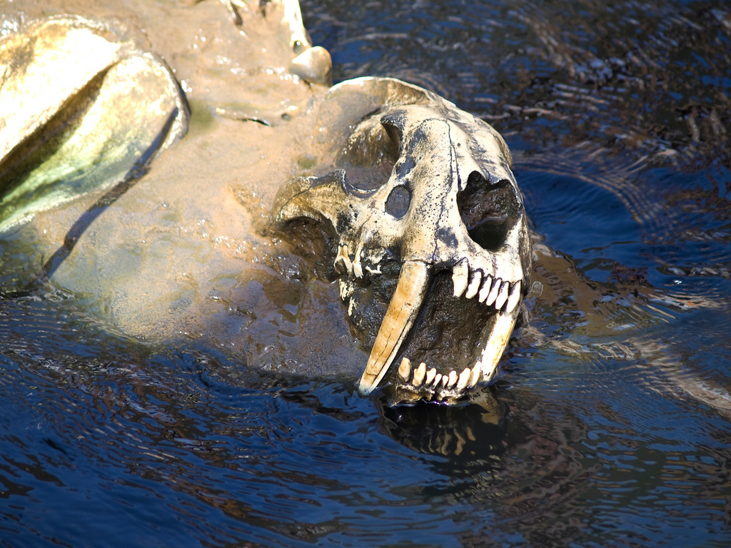 Scary Dead Things<br /> from the San Diego Zoo's Tar Pits area<br /> Myra Posner