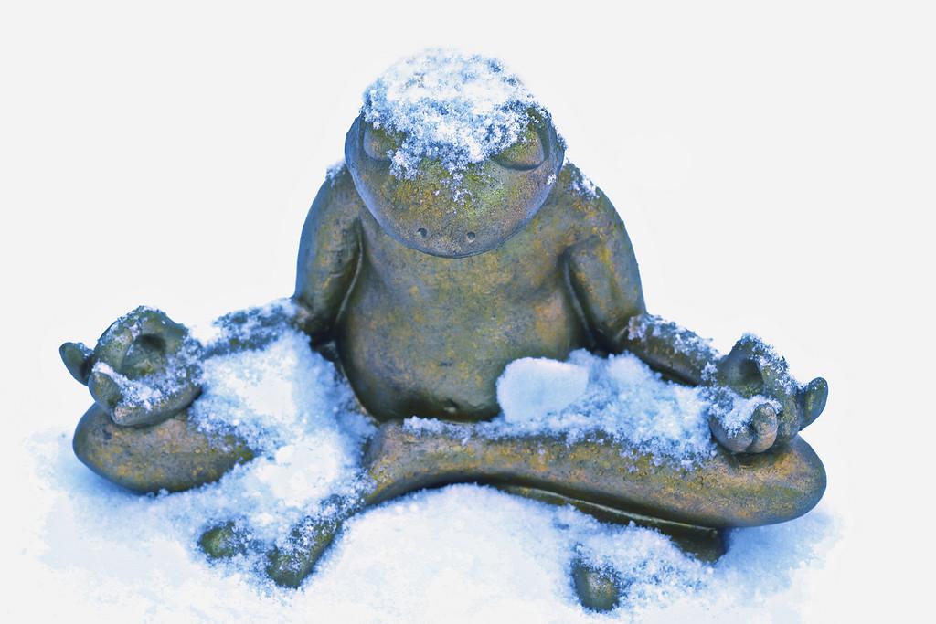 Zen Frog<br /> By Izzy beck