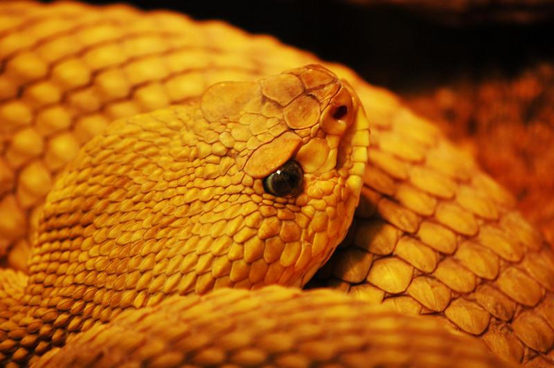 Snake<br /> By Thomas Richtsfeld