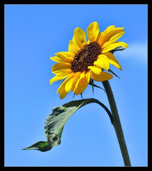 Sunshine<br /> By Daniel Pham