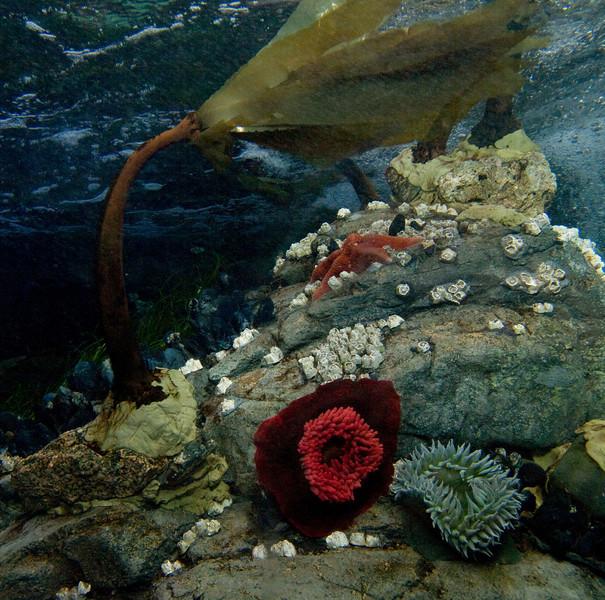 Under the Sea<br /> By Myra Posner