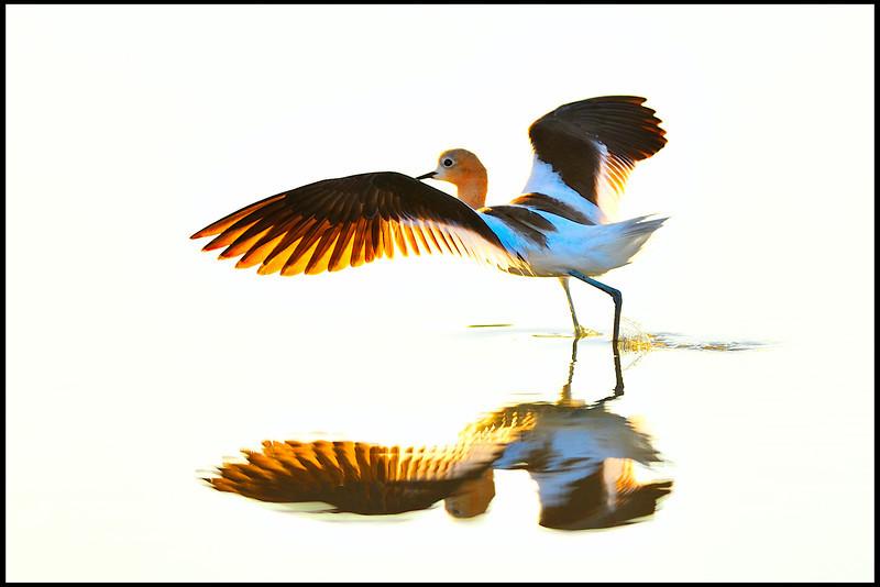 Landing<br /> By Daniel Pham