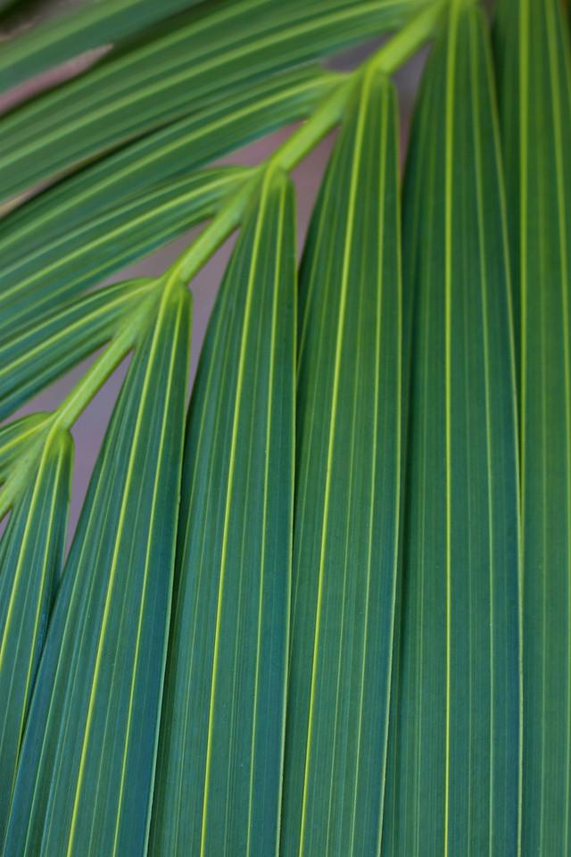 Simply Green<br /> By Elaine Randolph