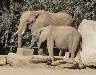 Safari Park - San Diego Zoo