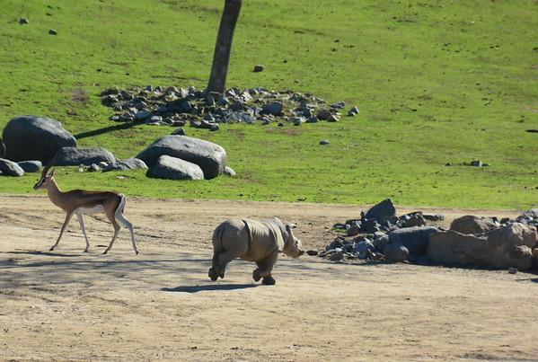 Safari Park -6819