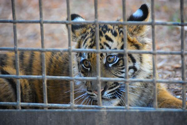 Safari Park -6798