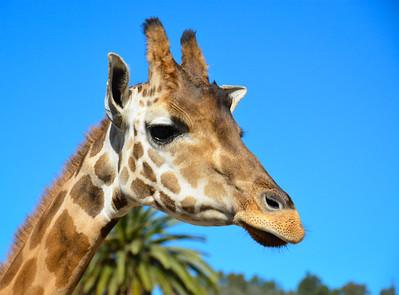 Safari Park -6843