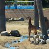 Safari Park -6947