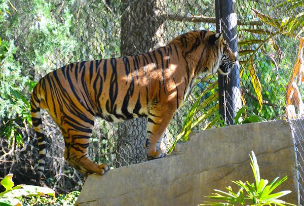 Safari Park -6785