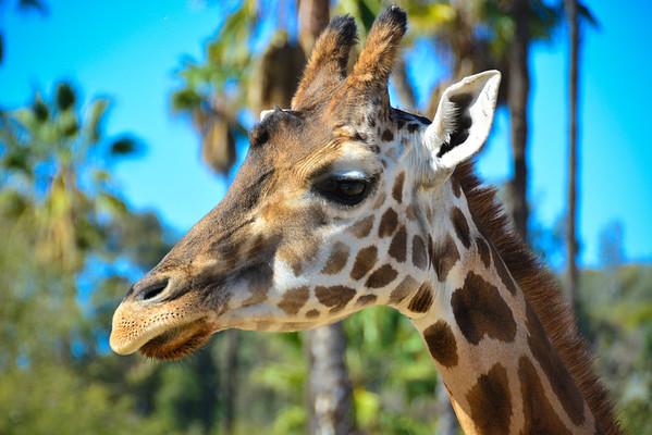 Safari Park -6841