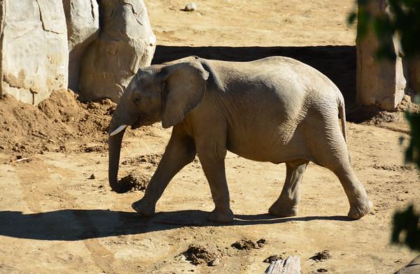 Safari Park -6808