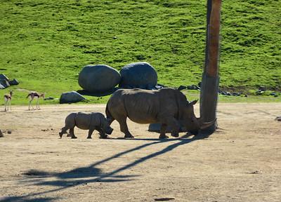 Safari Park -6820