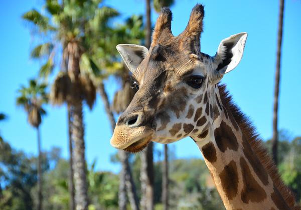Safari Park -6842