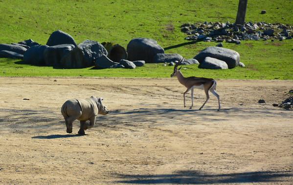 Safari Park -6818