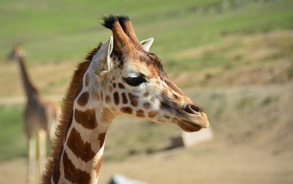 Safari Park -6836