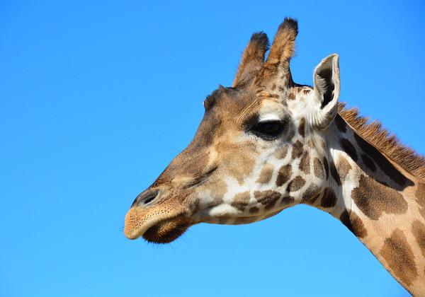 Safari Park -6844