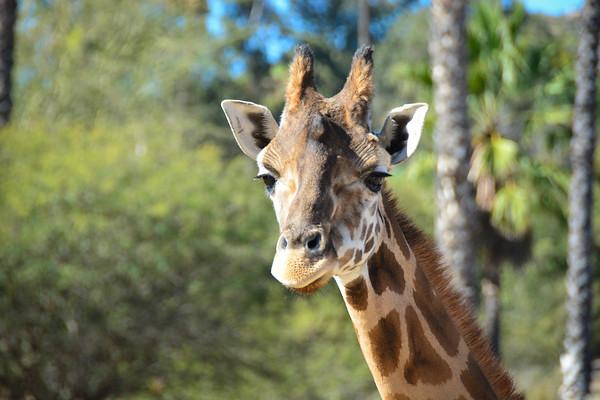 Safari Park -6840