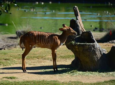 Safari Park -6809