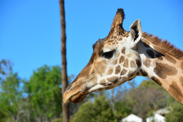 Safari Park -6845