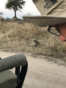 Hyena cub wasn't afraid