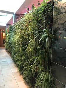 Wall of plants at hotel in Cape Town