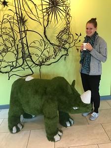 Rhino in Cape Town hotel