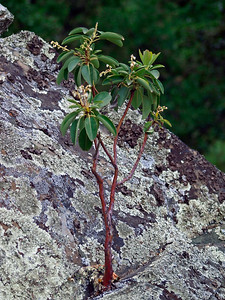 Tree growing from a rock At Safari West, Santa Rosa, CA