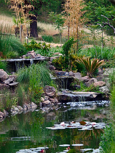 At Safari West, Santa Rosa, CA