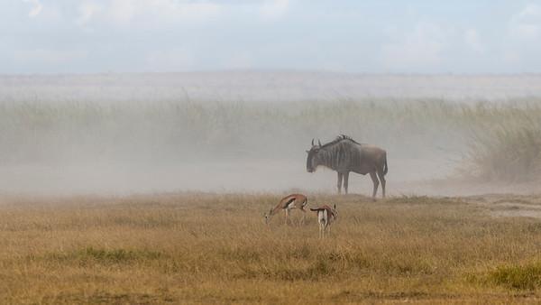 Dusty Amboseli