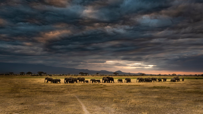 Elephant Herd under Ominous Clouds