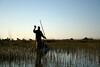 Guide in Okavango Delta poling mokoro